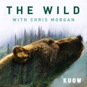 The Wild with Chris Morgan podcast
